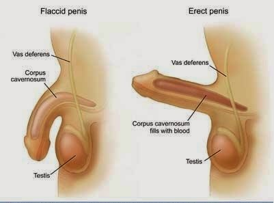 a legtökéletesebb pénisz