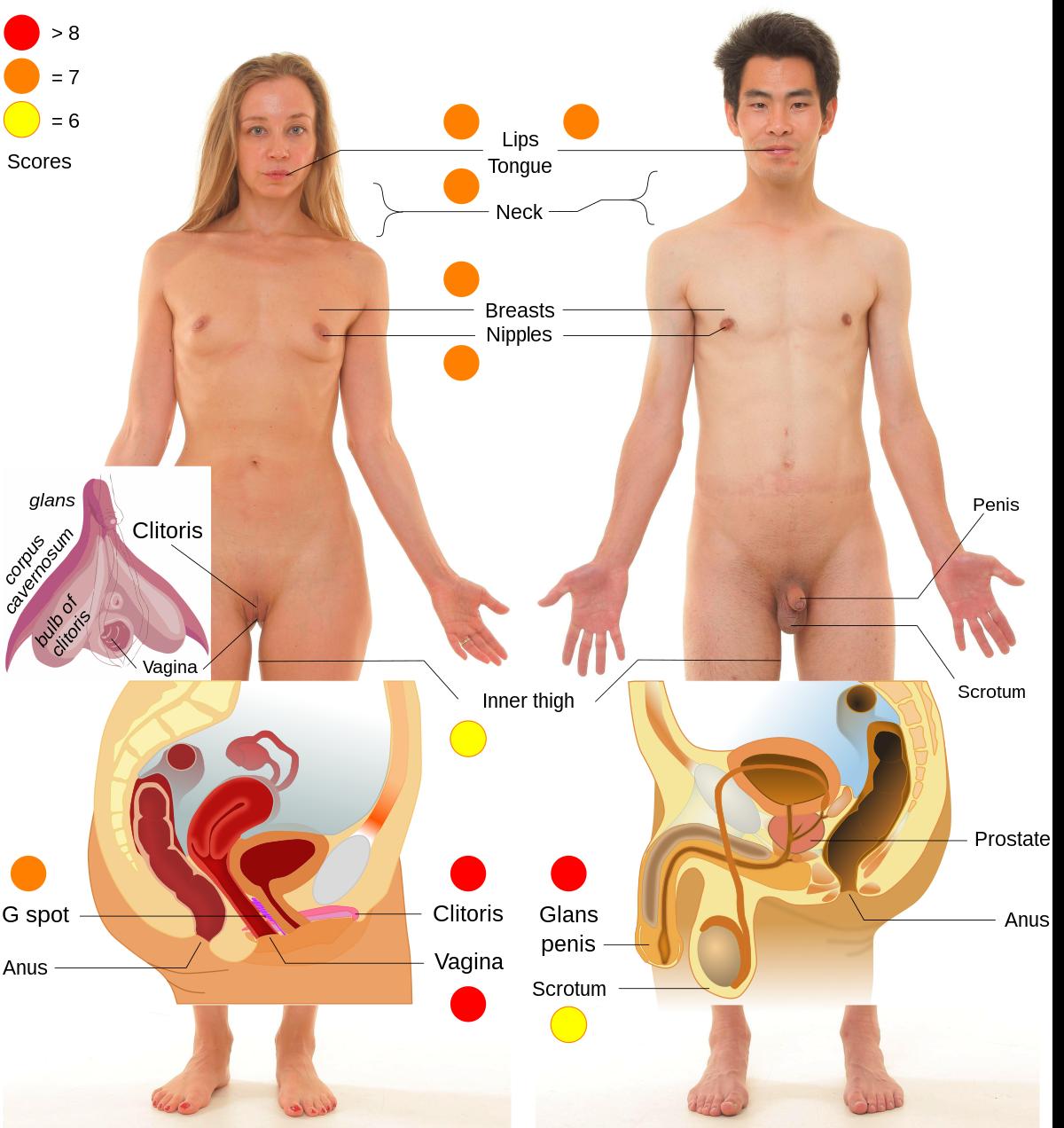 hogyan lehet meghosszabbítani a pénisz péniszét körte pénisz hüvely