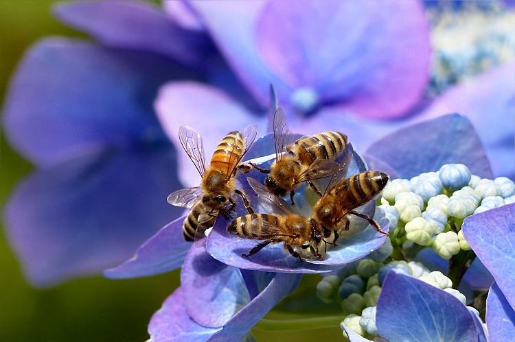 méheket teszünk a péniszre)