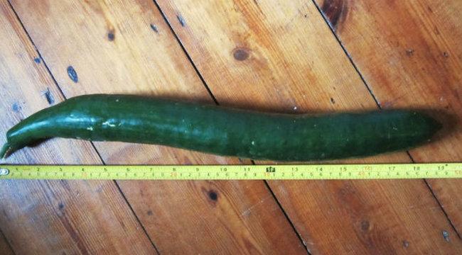 akinek a leghosszabb pénisze van)