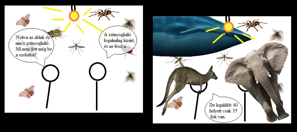 Egy kis biológia: önálló életet él az argonauta pénisze