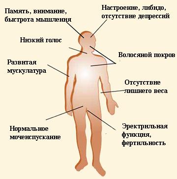 pénisz pubertás)
