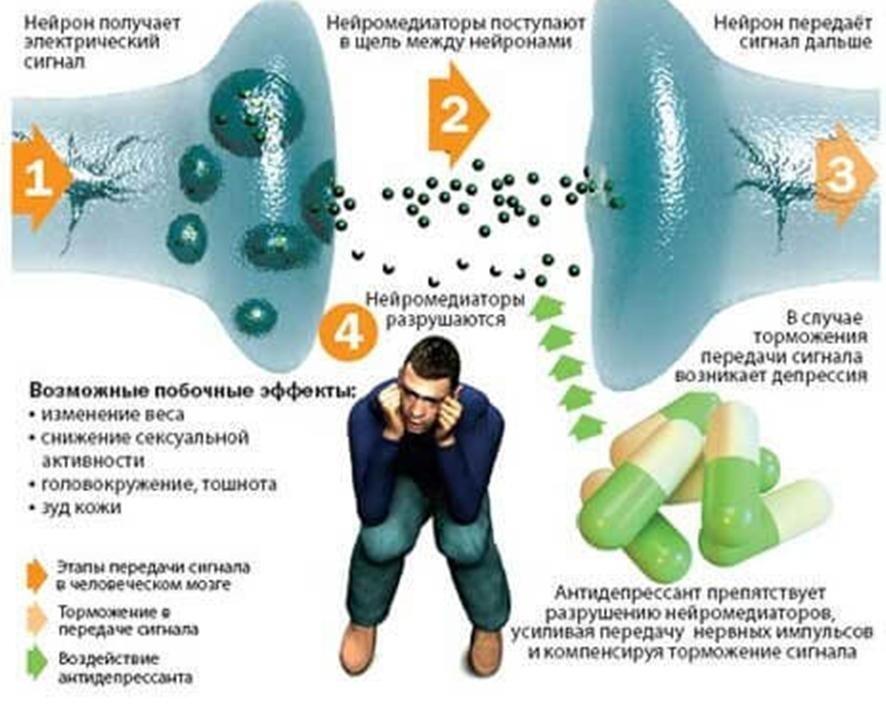 donormil erekció)