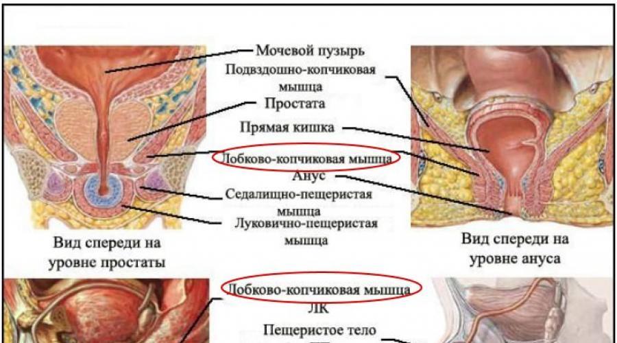 a kegel-edzés hatása az erekcióra)
