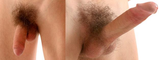a pénisz típusa és alakja