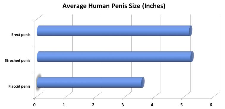 a péniszek különféle formái