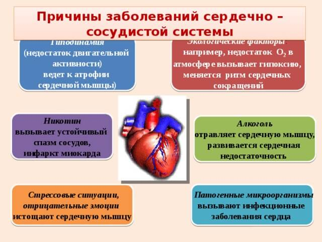 az erekció periódusai)
