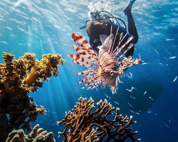 Merülés a leghíresebb Vörös-tengeri roncshoz, a Thistlegorm hajóhoz