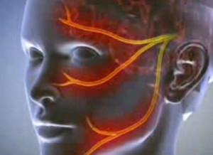 erekció során a fej nem nyílik meg teljesen)