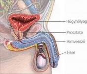 Miért barna a spermam? 🏥 Betegség, A Tünetek, A Kezelés.
