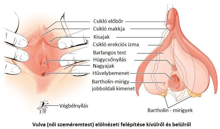 a pénisz zsugorodik a hidegben recept az erekció meghosszabbítására