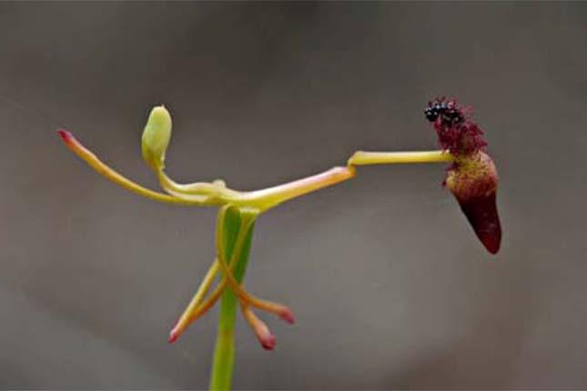 Pénisz vagy Növénytermesztés címke – ez a kifejezés sok helyen megtalálható az Agrároldalon