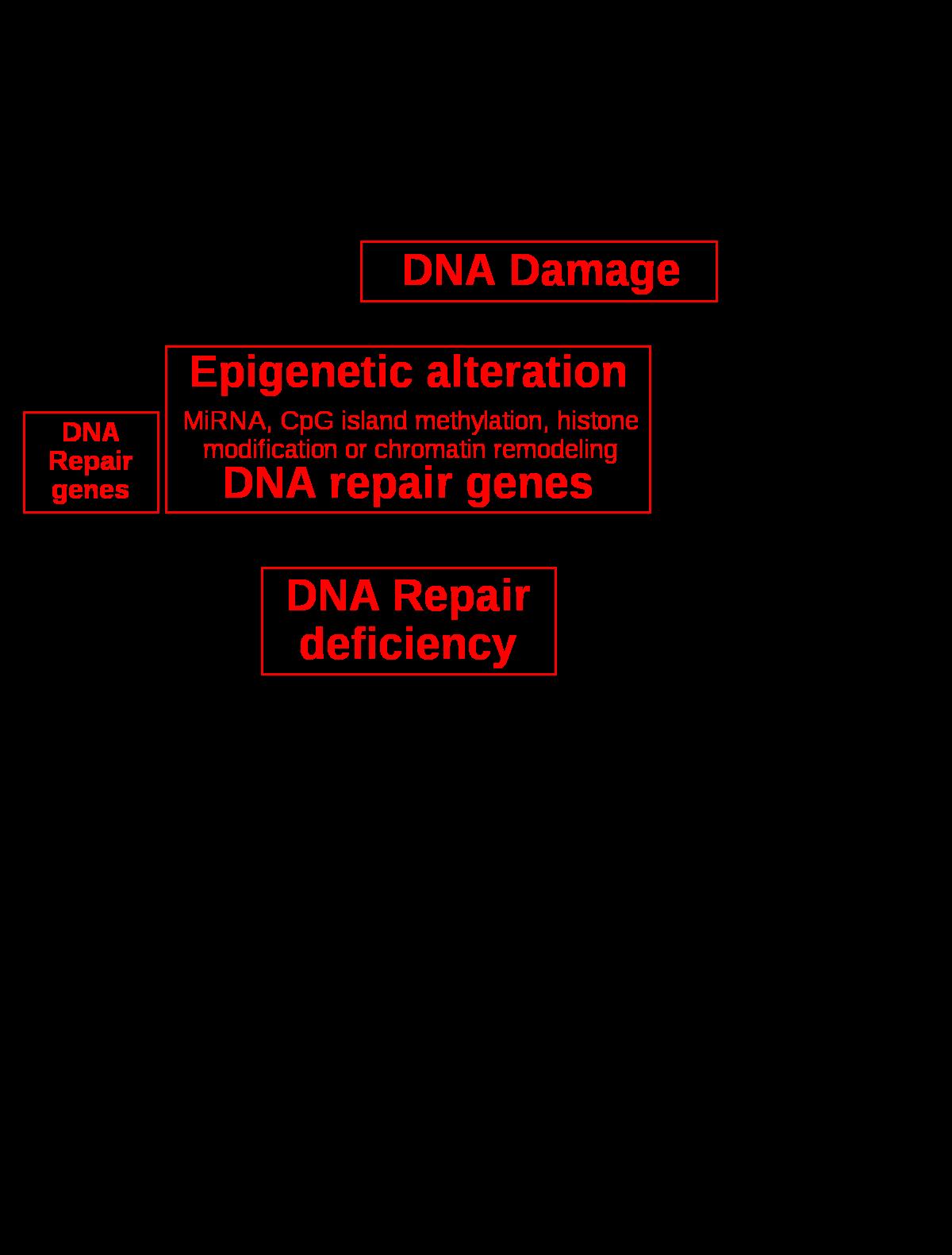 pénisz szerkezetének diagramja