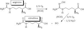 nitrogén-monoxid-erekció kenőcsök az érzékeny péniszhez