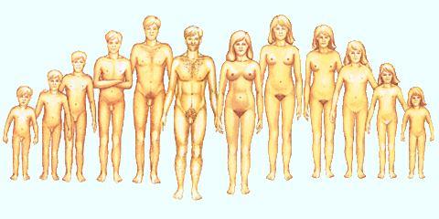 mellbimbó-erekció egy nőnél