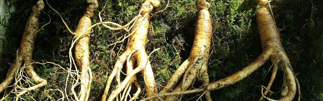 gyógynövények, amelyek meghosszabbítják az erekciót)
