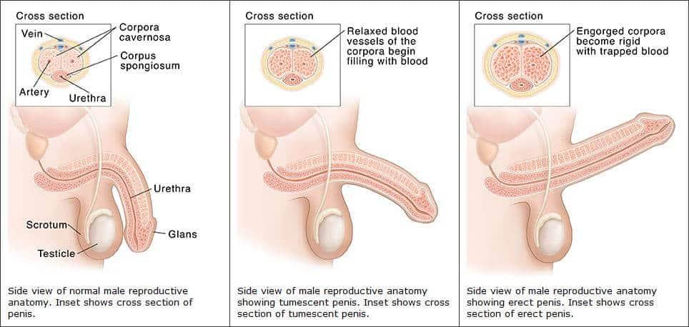 kellemetlen szag az erekció során