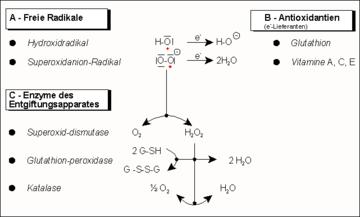 nitrogén-monoxid-erekció cum hiányos merevedés esetén