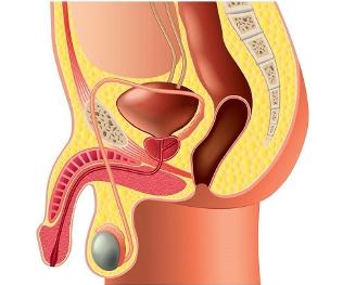 a pénisz görbülete hogyan lehet rögzíteni